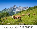 Cows On Austrian Alp ...
