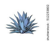Hand Drawn Blue Agave  Main...