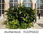 green tree and groom with a... | Shutterstock . vector #512292622
