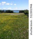Small photo of Wildflowers and meadow on Atlantic Ocean coast, on Mount Desert Island, Acadia National Park,Maine