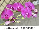 violet orchid. bouquet of... | Shutterstock . vector #512434312