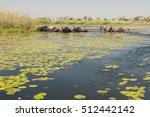 elephants  okavango delta ... | Shutterstock . vector #512442142