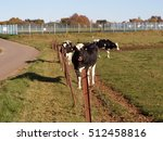 cow standing on green field | Shutterstock . vector #512458816