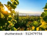 sunrise on fields of vineyards...
