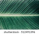 Details Of Big Green Leaf ...