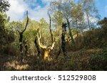 trehorenteuc  france   october... | Shutterstock . vector #512529808