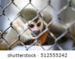 Squirrel Monkey In Cage
