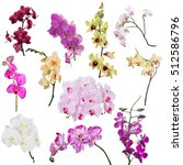 Set Of Different Orchid Flower...
