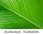 cigar flower plant or calathea... | Shutterstock . vector #512666506