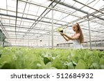 young adult woman gardening in... | Shutterstock . vector #512684932