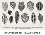 set leaf. exotics. vintage... | Shutterstock .eps vector #512695966