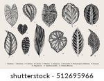 Set Leaf. Exotics. Vintage...