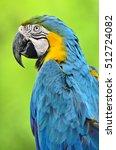 Beautiful Bird Blue And Gold...