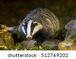 european badger  in the night | Shutterstock . vector #512769202