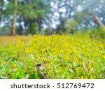 yellow flowers spring...   Shutterstock . vector #512769472