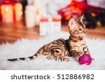 Bengal Cat Christmas