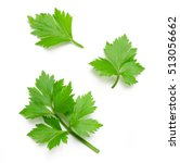 celery or parsley leaf isolated ... | Shutterstock . vector #513056662