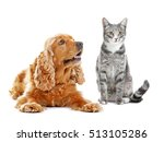 Stock photo cute dog and cat together on white background 513105286
