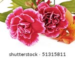 flowers closeup isolated on... | Shutterstock . vector #51315811
