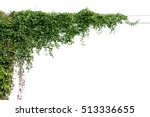 plants ivy. vines on poles on... | Shutterstock . vector #513336655