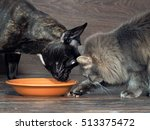 Stock photo cat and dog eating food from a plate on the floor 513375472