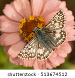 Dorsal View Of A Common...