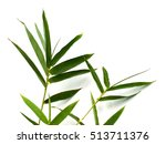 leaf of bamboo isolated on... | Shutterstock . vector #513711376