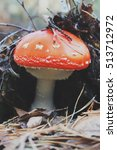 Small photo of Poisonous amanita in the forset.