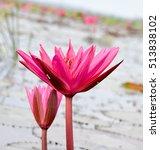Beautiful Red Lotus Fields