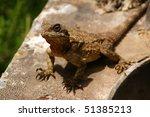 lizard | Shutterstock . vector #51385213