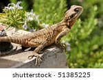 lizard | Shutterstock . vector #51385225