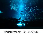 Beautiful Deep Sea And Fish
