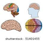 diagram of a human brain in... | Shutterstock .eps vector #51401455