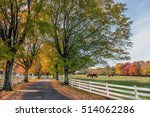 Tree Lined Country Road In...
