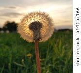 dandelion puff at sunset | Shutterstock . vector #514155166