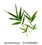 bamboo leaves isolated on white. | Shutterstock . vector #514186882