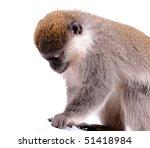 vervet monkey on the white... | Shutterstock . vector #51418984