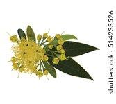 golden penda chrysanthus vector | Shutterstock .eps vector #514233526