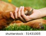 Stock photo yellow dog paw and human hand shaking friendship 51431005
