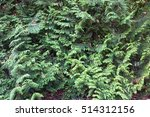 background texture of shrubbery ... | Shutterstock . vector #514312156