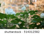 a large flower on a background... | Shutterstock . vector #514312582