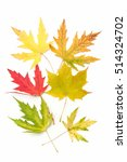 colored maple leaves. autumn.... | Shutterstock . vector #514324702