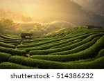 Stock photo the tea plantations background tea plantations in morning light 514386232