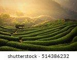 the tea plantations background