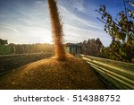 Corn Harvest In Autumn With...