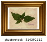 herbarium from pressed and... | Shutterstock . vector #514392112