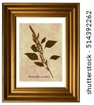 Small photo of Herbarium from pressed and dried flowers and leaves of foxtail amaranth (Amaranthus caudatus) in the frame.
