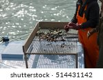 Oysters And Mussels In Bay Of...