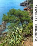 Small photo of Conifer tree and stripped Agave americana plant on edge of cliff above sea.