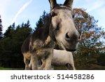 A Curious Donkey. Wide Angle...